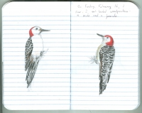 3_woodpeckers.jpg